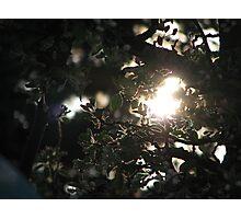 AppleBlossoms and the Setting Sun Photographic Print