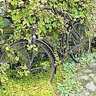 Bicycle Abandoned by Woodie