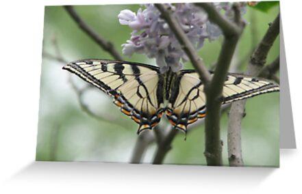Upside down Butterfly by gypsykatz
