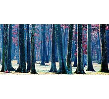 A Gathering of Trees Photographic Print