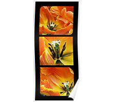 Orange Tulip Trio Poster