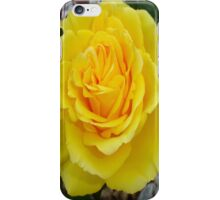 Head On View Of A Yellow Rose With Garden Background iPhone Case/Skin