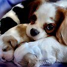 puppy love by Anthony Mancuso