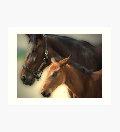 Yankee Taboo and Foal Art Print