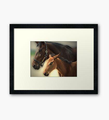 Yankee Taboo and Foal Framed Print