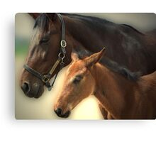 Yankee Taboo and Foal Canvas Print