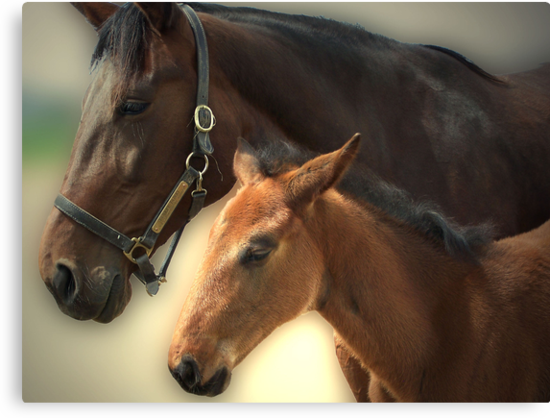 Yankee Taboo and Foal by Wendy C. Fike