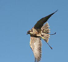 Flying High by kroscoe