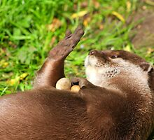 "I Really ""Otter"" Get My Nails Done ! by jdmphotography"