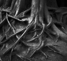 Roots by Dave Wilson