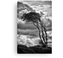 Wind & Wuthering Canvas Print