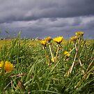 song of summer by NordicBlackbird
