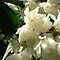 THE MOST BEAUTIFUL WHITE FLOWER