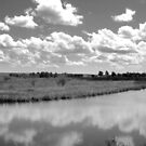 Panorama The Creek by Mindy McGregor