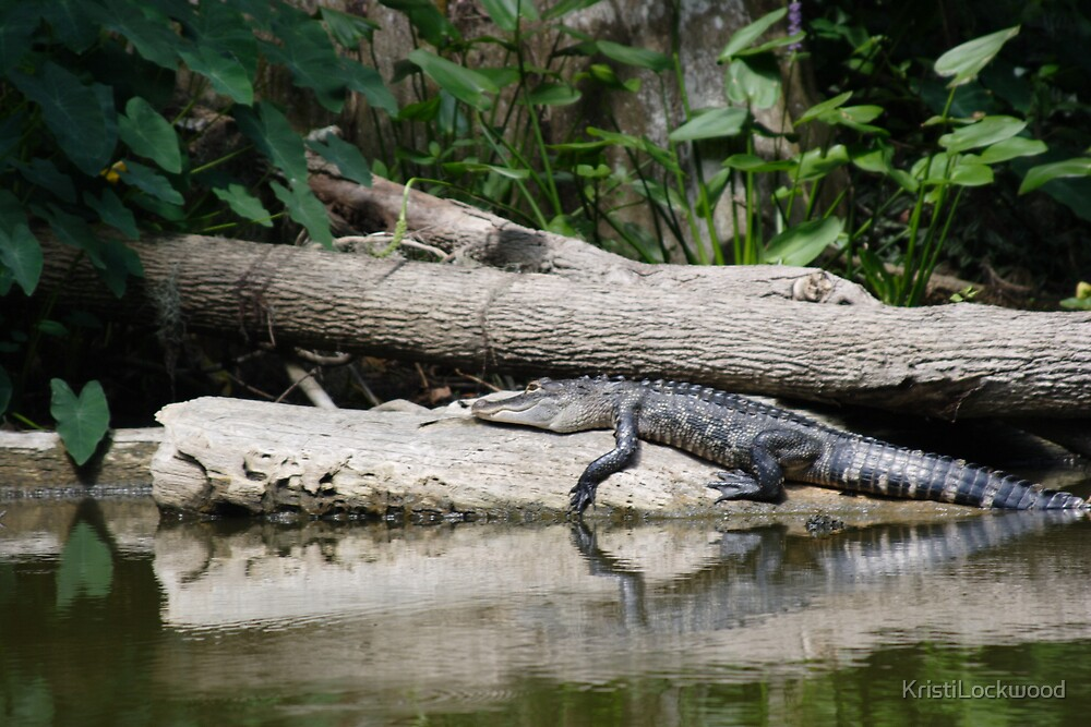 Alligator at Rest. Dora Canal, FL by Kristi Lockwood