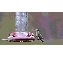 humming bird blocks detailed Photographic Print