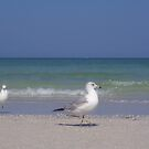 Sharing the Beach by Ilene Clayton