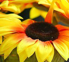 FLOWERS 2011 by Madeline M  Allen