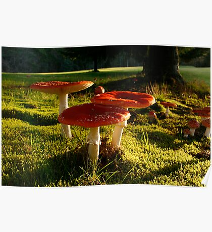 Dangerous Red Cap Toadstools Poster