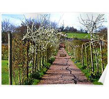Pretty Walkway at Escot Park, Devon. UK Poster