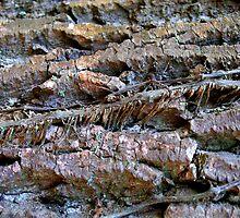 climbing rocks by Jaclynn Burns