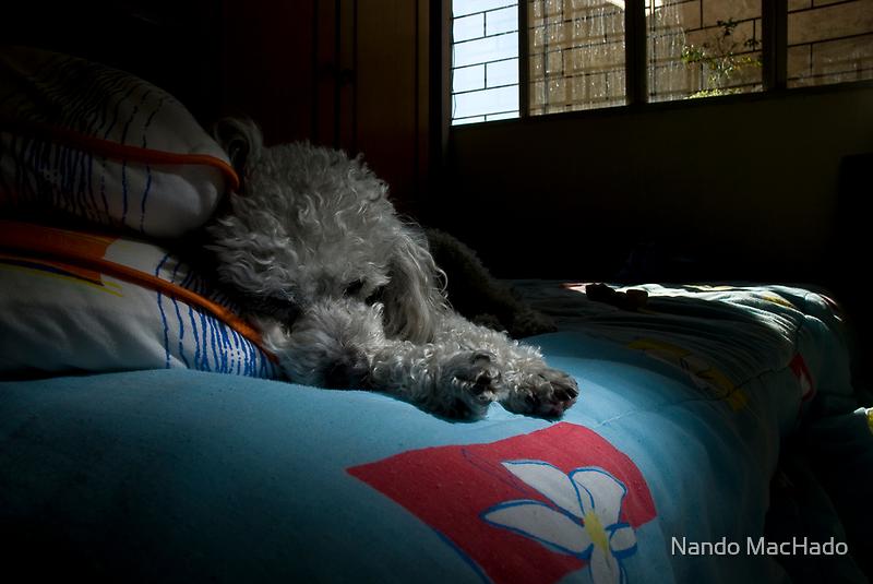 Fluffy_2 by Nando MacHado