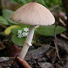 Mushroom by MMerritt