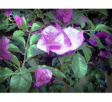 Unique purple flower Photographic Print