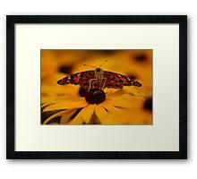 Summer Monarch Framed Print
