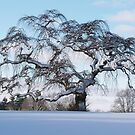 Scraggly Tree - Winter by BarbL