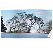Scraggly Tree - Winter Poster