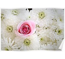"""""""One of a Kind"""" Pink Rose in Daisies Poster"""