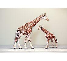 Giraffe Love Photographic Print