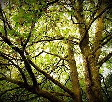 Sunlit Tree Canopy by Amber Leigh Summers
