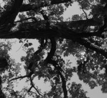Untitled Tree in grey Sticker