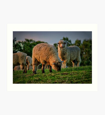 """""""The Call of the Shepherd"""" Art Print"""