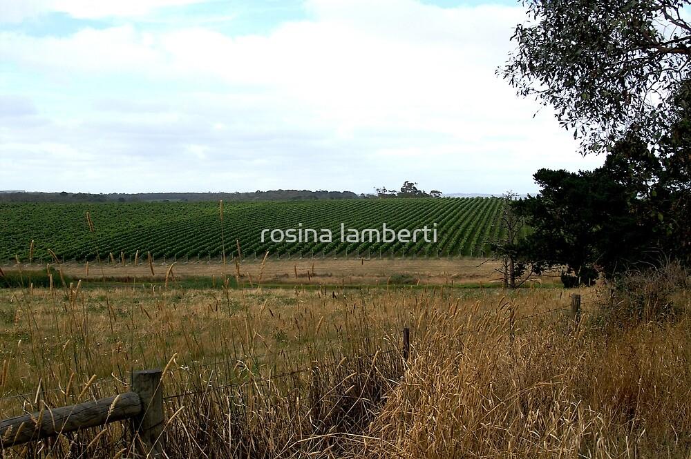 Peninsula Vineyards,Mornington Peninsula,Victoria, by Rosina  Lamberti