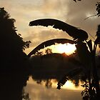 Sunrise - Kinabatangan River - Borneo by David Meyer