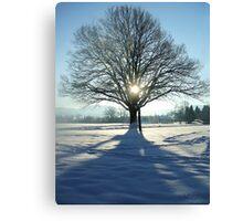 coronation tree Canvas Print