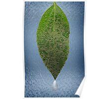 Dew Laden Leaf Poster