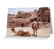 Pair of Camels Greeting Card