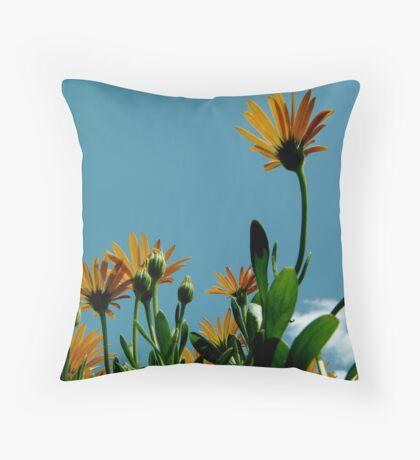 African daisies Throw Pillow