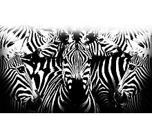zebre Photographic Print