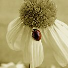 Daisybug by stopthat