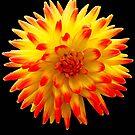 Flower by Jeff  Ryan