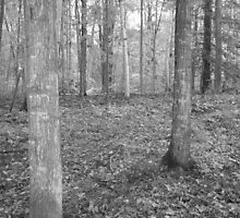 black and white Muskoka trees by horizoncarrie