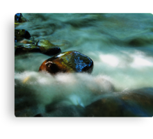 Slippy Canvas Print
