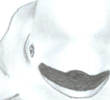 Baby Beluga Whale Sticker