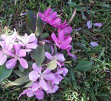 pwetty flowers by Jessica Leavitt