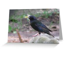 Starling Visitor Greeting Card